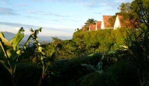 View from Pura Vida Resort and Spa